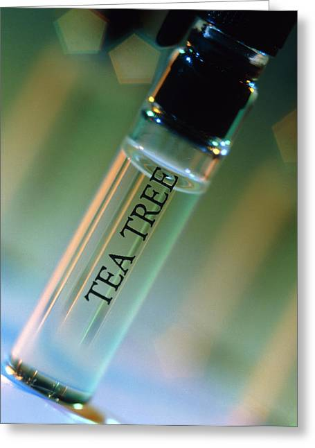 Bottle Of Essential Oil From Tea Tree Greeting Card by Steve Horrell