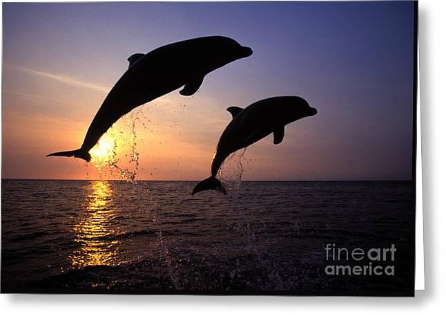 Bottlenose Dolphins Greeting Card