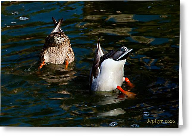 Bottoms Up Greeting Card by Jephyr Art