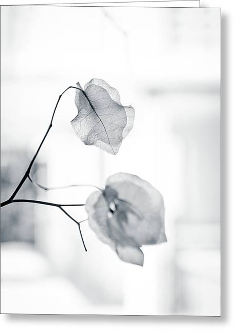 Bougainvillea - High-key Lighting Greeting Card