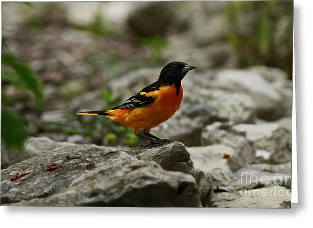 Bounty Of Nature Greeting Card by Inspired Nature Photography Fine Art Photography