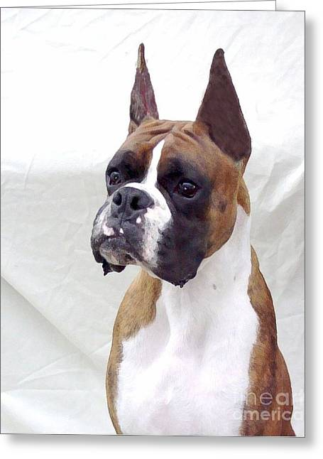 Boxer 140 Greeting Card by Larry Matthews
