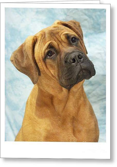 Boxer 169 Greeting Card by Larry Matthews