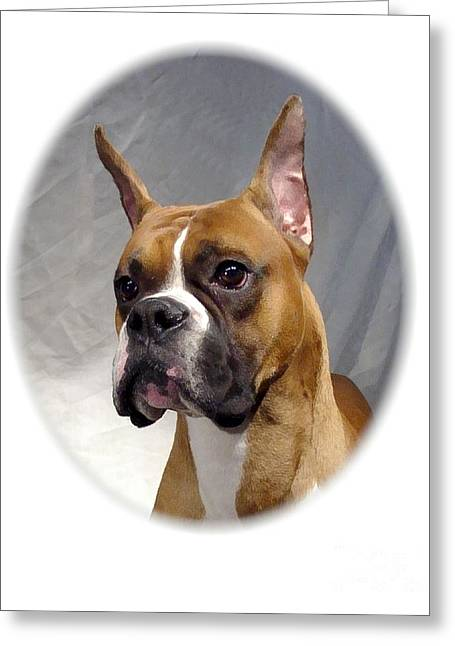 Boxer 82 Greeting Card by Larry Matthews