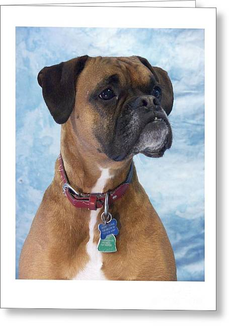 Boxer 950 Greeting Card by Larry Matthews