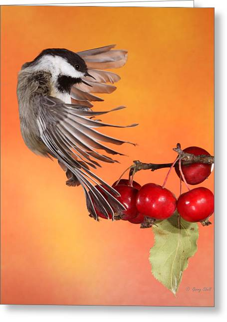 Greeting Card featuring the photograph Bracing To Back Up by Gerry Sibell