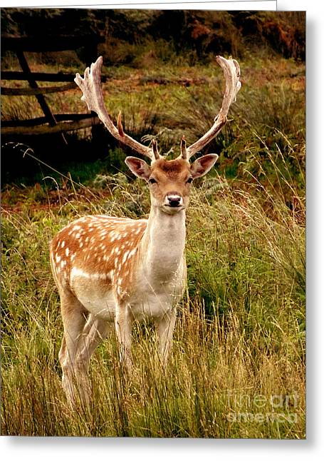 Greeting Card featuring the photograph Wildlife Fallow Deer Stag by Linsey Williams