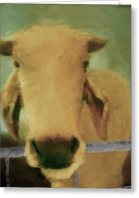 Brahma Cow Greeting Greeting Card by Ann Powell