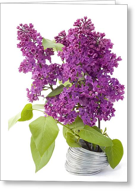Greeting Card featuring the photograph Branch Of A Lilac And Wire by Aleksandr Volkov