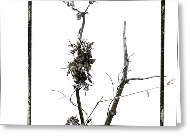 Branch Of Dried Out Flowers. Greeting Card by Bernard Jaubert