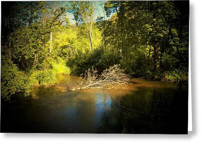 Branch On The Kalamazoo River Greeting Card by Joyce Kimble Smith