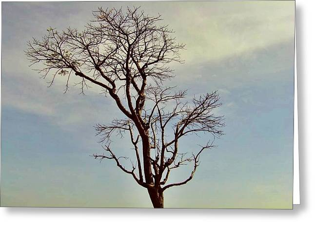 Branch Out Greeting Card by Peter P G