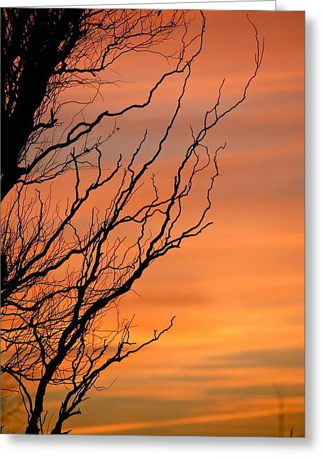 Branches Meandering Through The Sunset Greeting Card