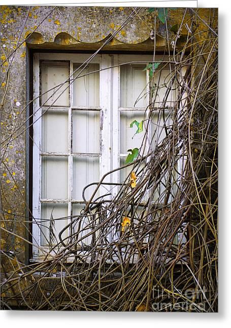 Branchy Window Greeting Card by Carlos Caetano