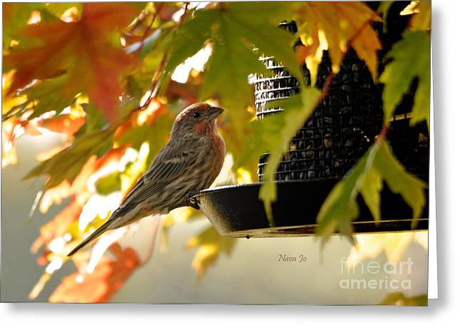 Breakfast With A View Greeting Card by Nava Thompson