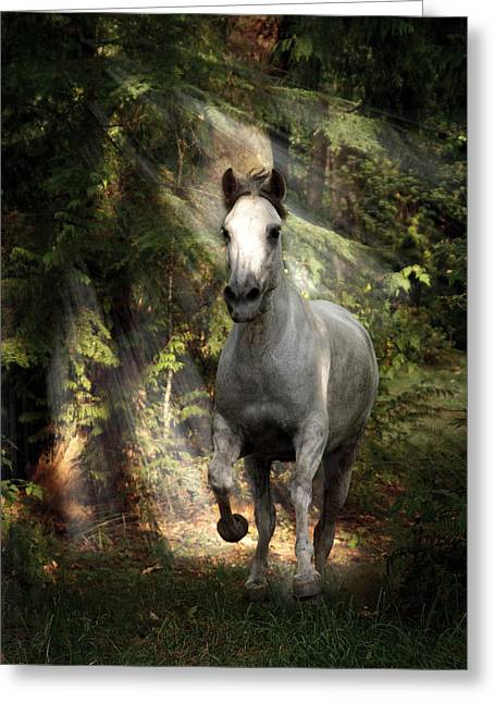 Breaking Dawn Gallop Greeting Card by Wes and Dotty Weber