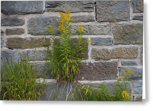 Brick Wall Flowers Greeting Card by Michel DesRoches