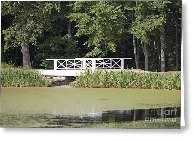 Bridge Over An Algae Covered Pond Greeting Card by Jaak Nilson