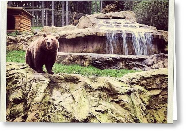 Bärig... #bär #bear #waterfall #epic Greeting Card