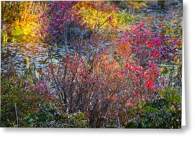 Bright Autumn Light Greeting Card