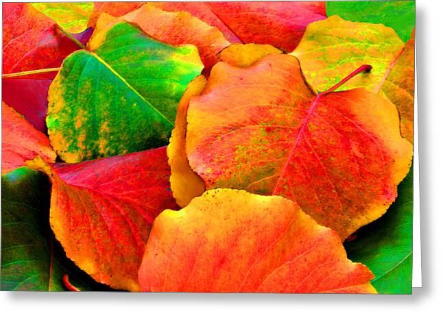 Bright Beautiful Fall Leaves Greeting Card