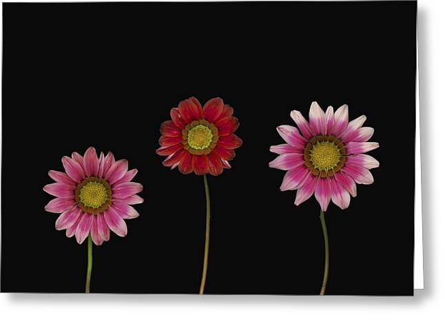 Bright Colorful Daisies Greeting Card by Deddeda