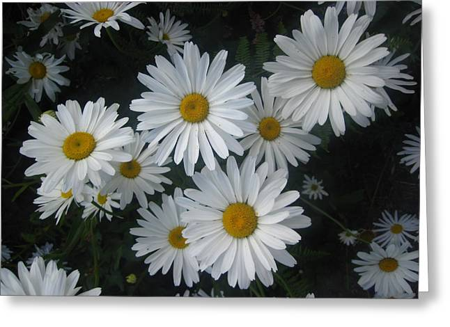 Bright Eyed Daisys Greeting Card