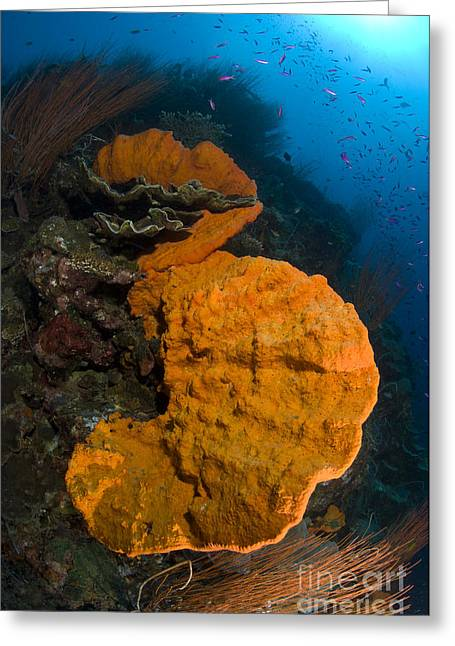Bright Orange Sponge With Sunburst Greeting Card by Steve Jones