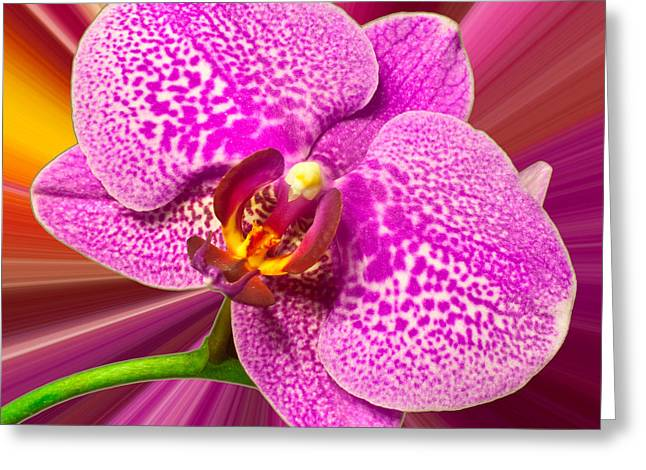 Greeting Card featuring the photograph Bright Orchid by Michael Waters