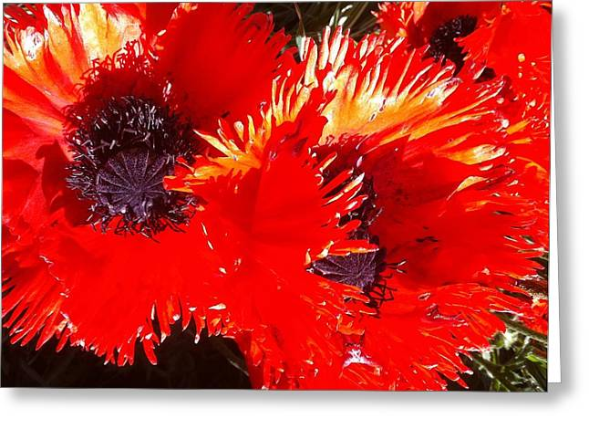 Bright Red Greeting Card by Ken Riddle