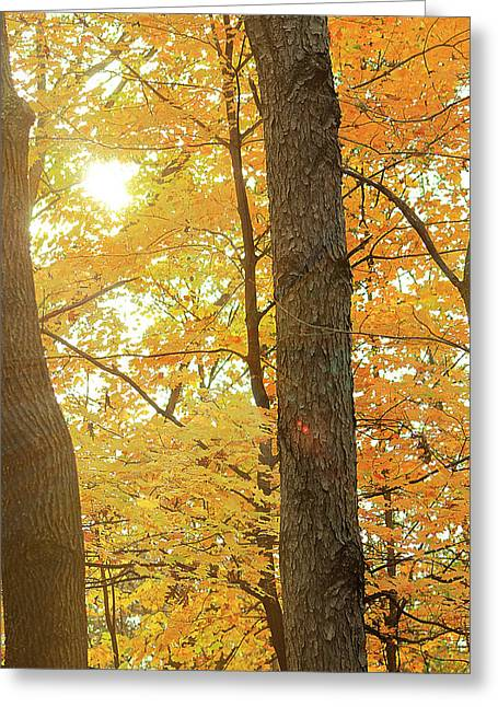 Bright Yellow Greeting Card by Scott Hovind
