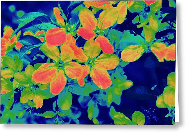 Brilliant Blossoms II Greeting Card by Tessa Murphy