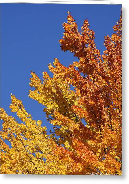 Brilliant Fall Color And Deep Blue Sky Greeting Card by Mick Anderson