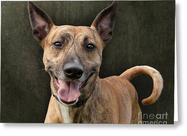 Brindle Dog With Great Ears Greeting Card