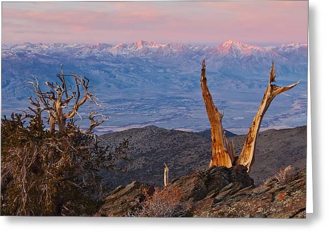 Bristlecone Bishop Sunrise Greeting Card by Nolan Nitschke