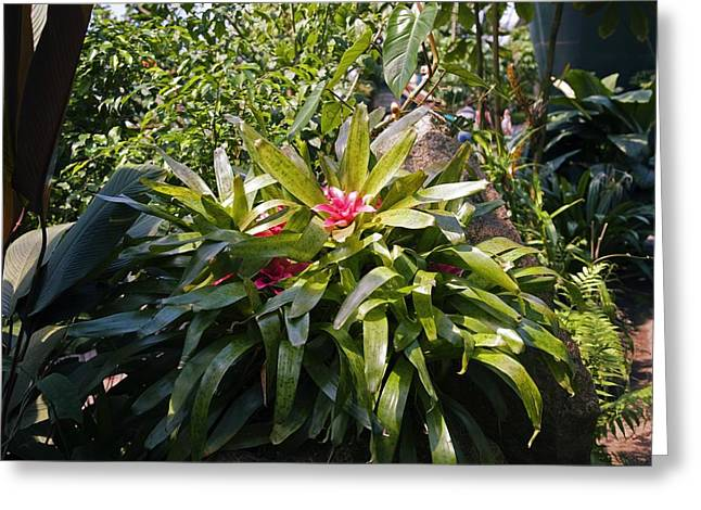 Bromeliad Plant Greeting Card by Dr Keith Wheeler