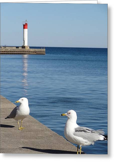 Bronte Lighthouse Gulls Greeting Card