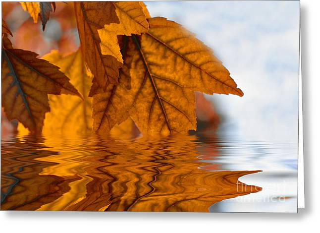 Bronze Reflections In Autumn Greeting Card