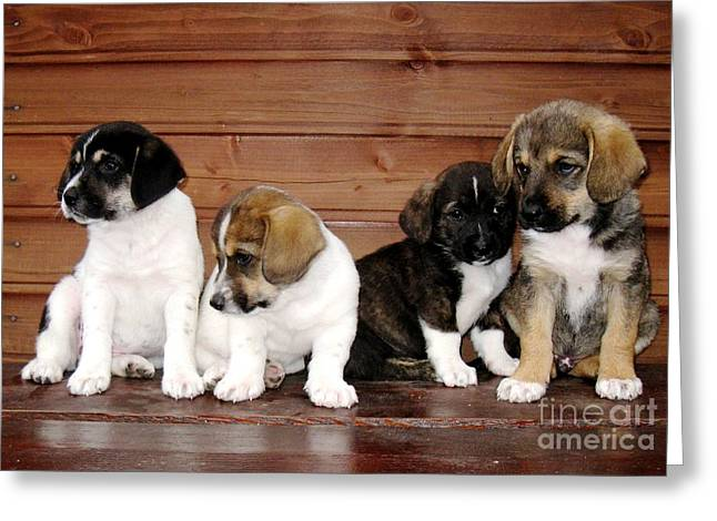 Brothers Puppies Greeting Card