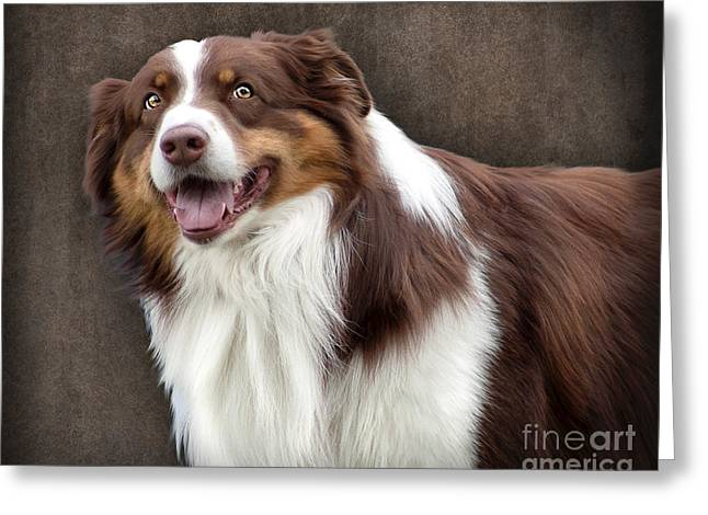 Greeting Card featuring the photograph Brown And White Border Collie Dog by Ethiriel  Photography