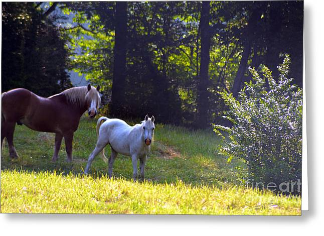 Brown And White Horse-19 Greeting Card by Eva Thomas