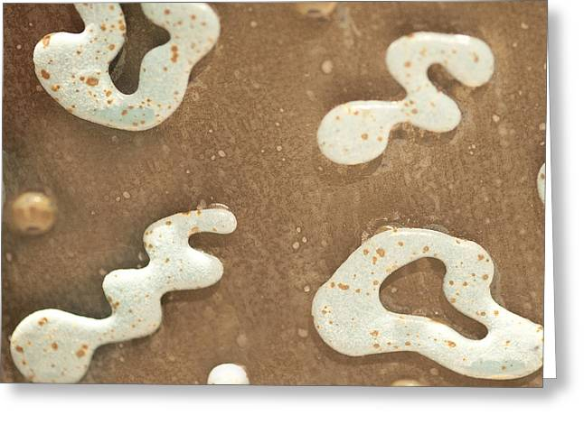 Brown And White Greeting Card by Artist and Photographer Laura Wrede