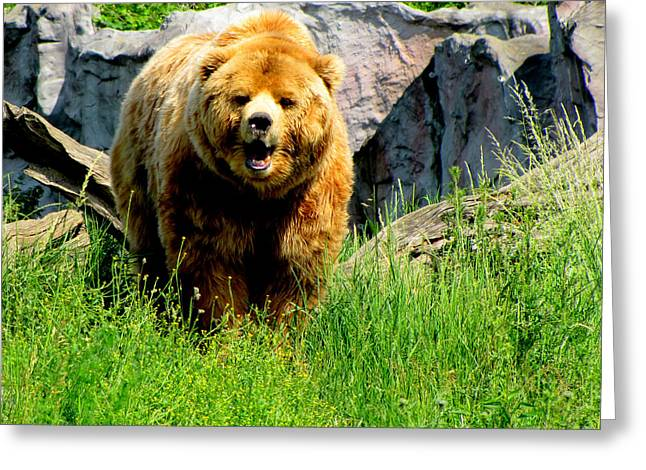Greeting Card featuring the photograph Brown Bear by Barbara Walsh