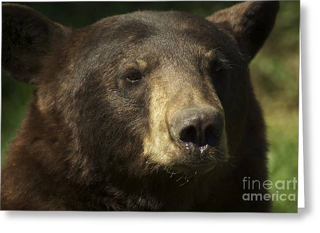 Brown Bear Greeting Card by Jenny May