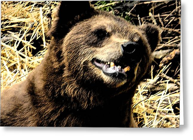 Brown Bear Smiling Greeting Card by Derek Swift