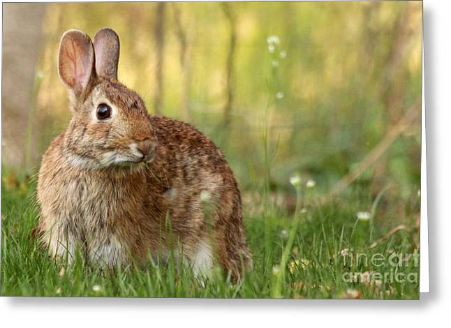 Brown Bunny Greeting Card by Denise Pohl