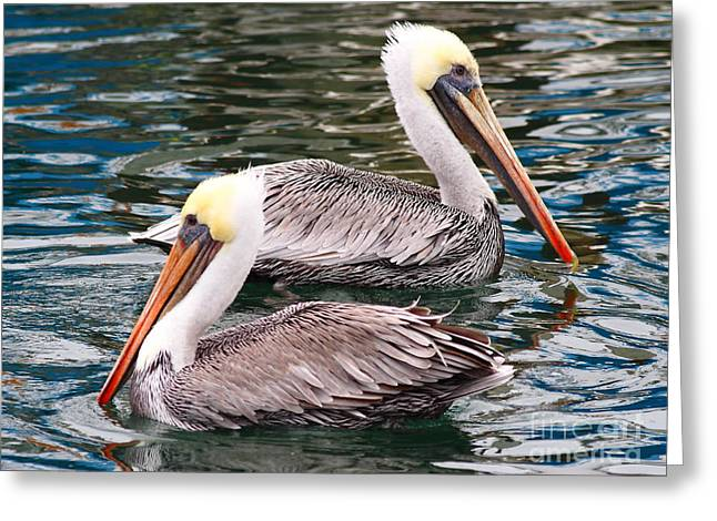 Brown Pelican . 7d8238 Greeting Card by Wingsdomain Art and Photography