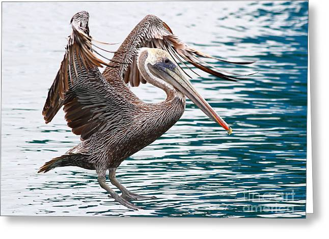 Brown Pelican . 7d8253 Greeting Card by Wingsdomain Art and Photography