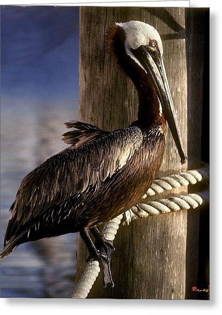 Greeting Card featuring the photograph Brown Pelican In Key West 9l by Gerry Gantt