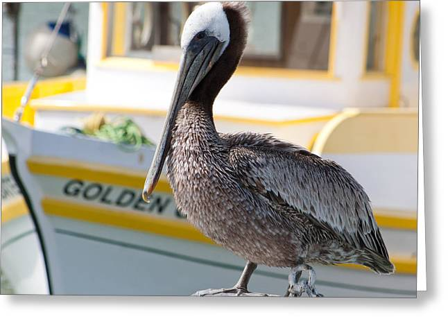 Greeting Card featuring the photograph Brown Pelican by Randy Bayne